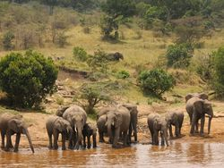 DM Tours - individuelle Safaris in Kenia - Safariurlaub